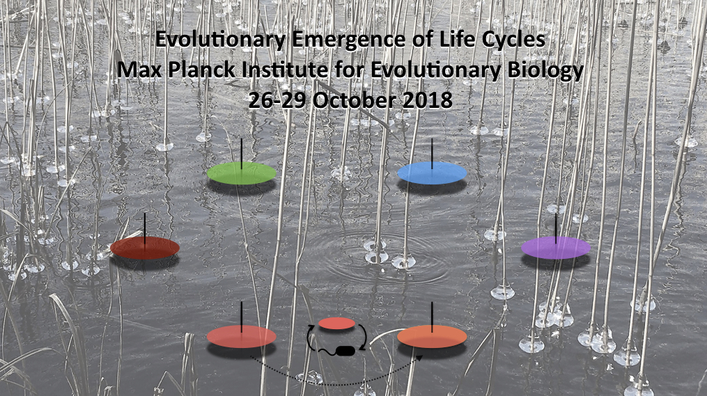 Evolutionary emergence of life cycles